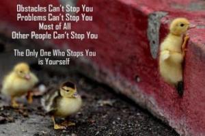 perseverance birds